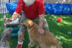 Santa's-furry-friends